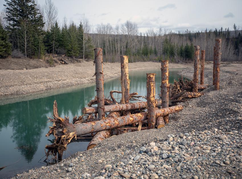 Constructed Peace River side channels and Engineered Log Jams (ELJ)  provide enhanced fish habitat in select areas near the dam site. A total of 62 ELJs will be installed in the constructed south bank channels. (Spring 2019)